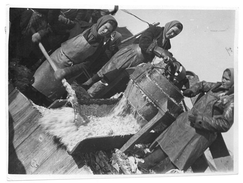 Шинковка капусты механическим измельчителем в Коломенском