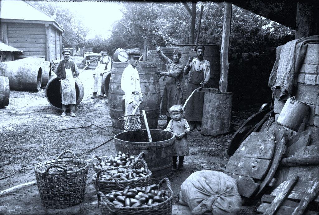Засолка огурцов в Коломенском