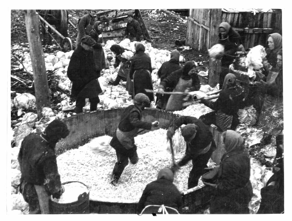 Закладка капусты в дошник в Коломенском